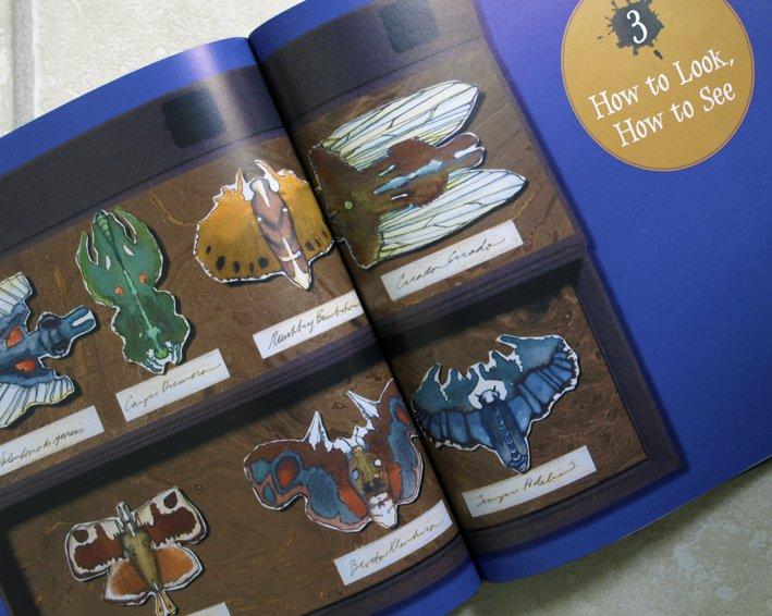 ink-blot-moth-specimens