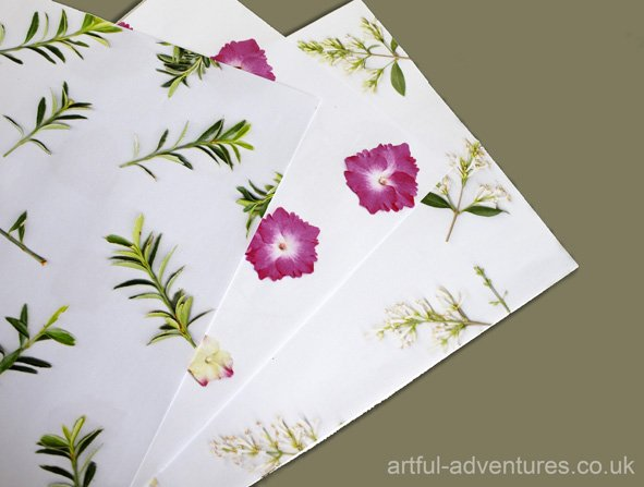 botanical-papers